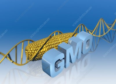 Genetically modified food, illustration