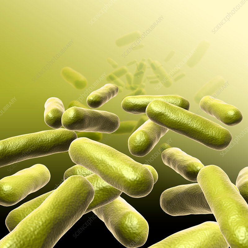 Bacteria, illustration