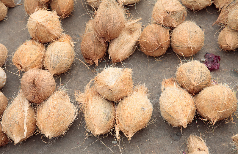 Coconuts for sale in market