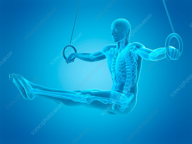 Athlete using gymnastic rings, illustration