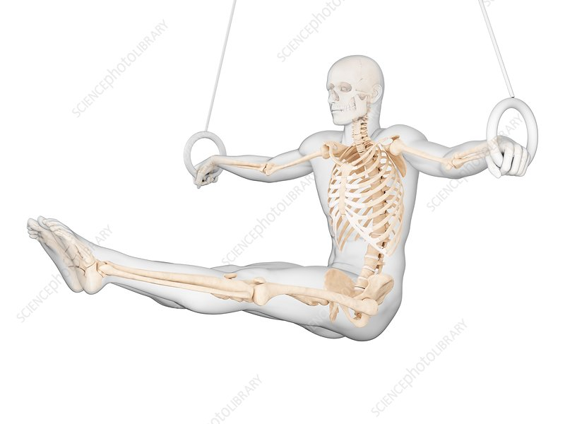 Skeletal structure of athlete, illustration