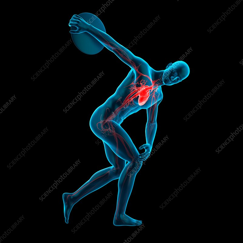 Anatomy of athlete throwing discus, illustration