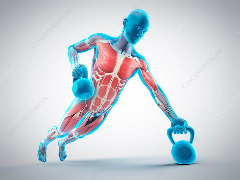 Person lifting kettle bell, illustration