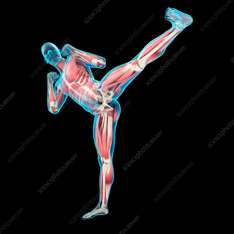 Person doing high kick, illustration
