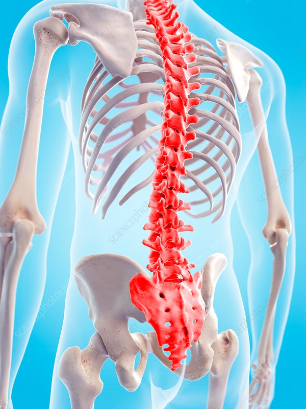 Human spinal pain, illustration