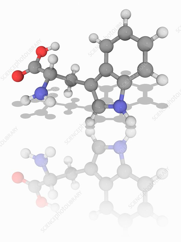 Tryptophan organic compound molecule