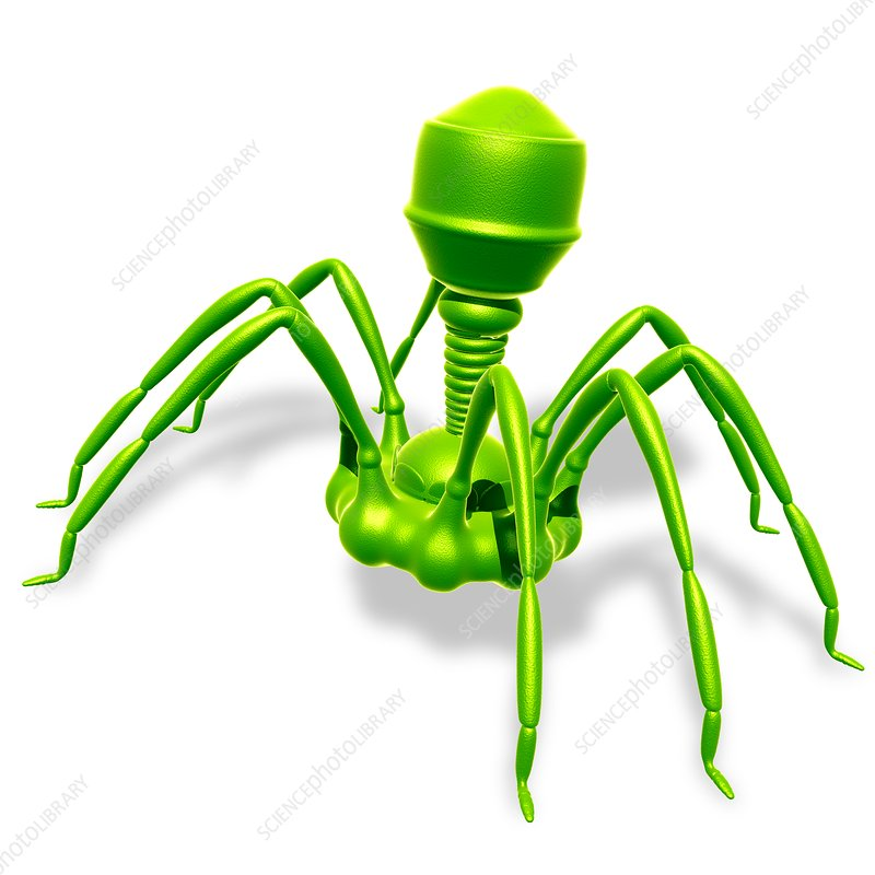 Bacteriophage virus, illustration