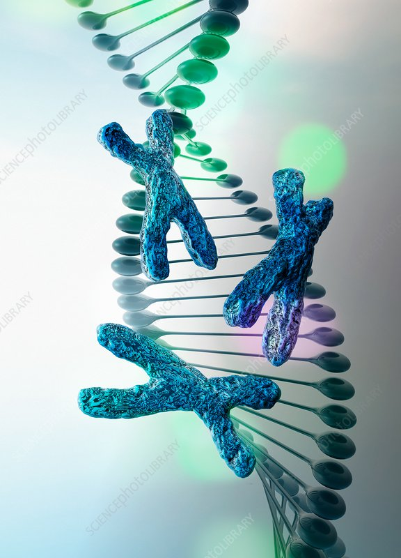 DNA strand with x chromosomes, illustration