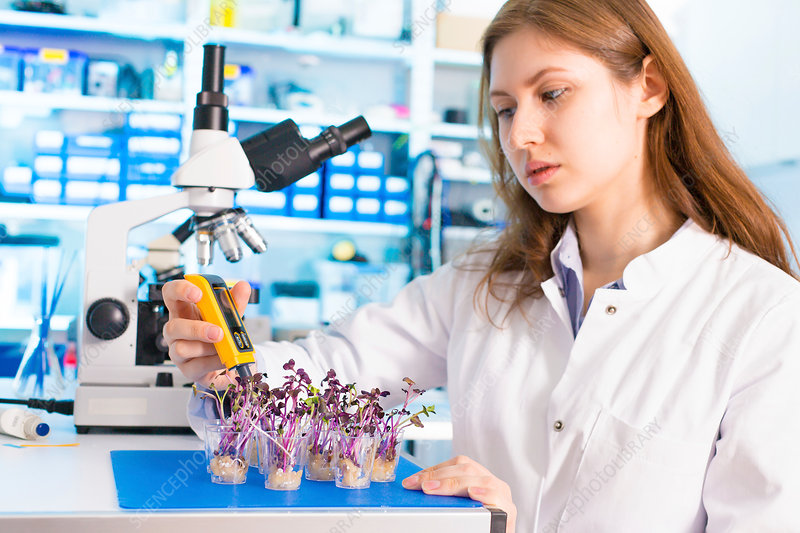 Woman working in microbiological laboratory
