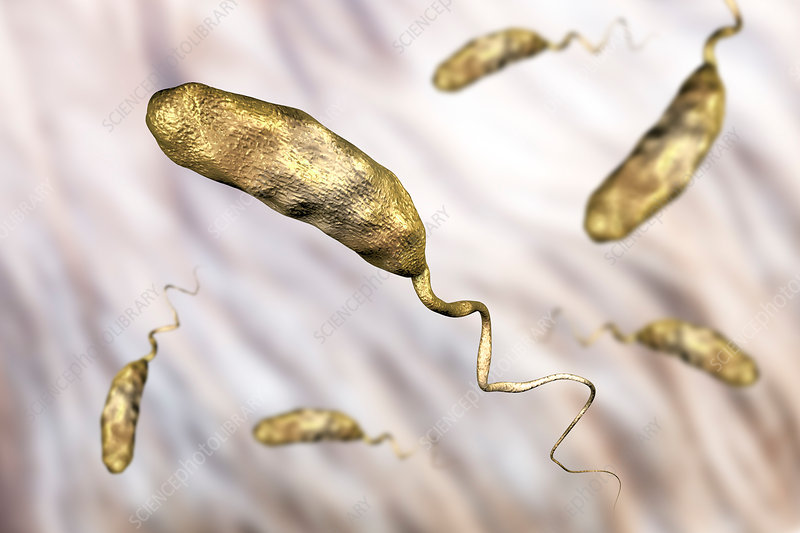 Cholera bacterium, illustration