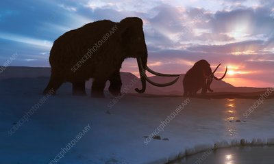 Artwork of the Tundra Mammoth