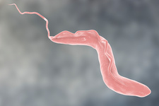 Sleeping sickness parasite, illustration