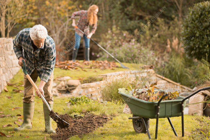 Couple gardening doing yard work