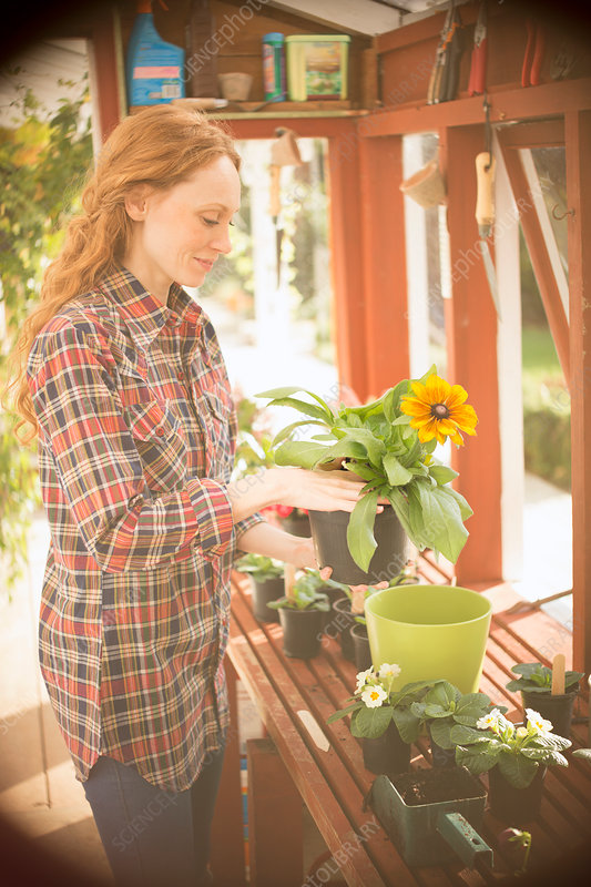 Woman gardening potting flowers in greenhouse