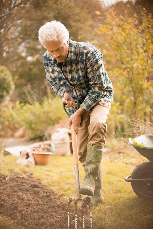 Man gardening digging dirt in autumn garden