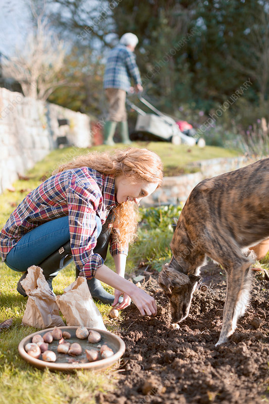 Woman with dog gardening planting bulbs in dirt