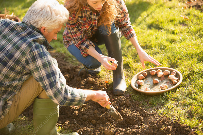 Couple gardening digging planting bulbs