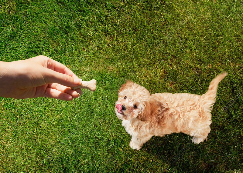 Pet owner holding treat