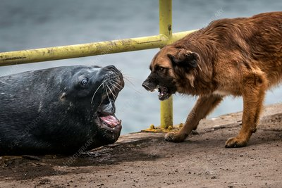 Sea lion and dog