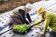 Two people planting seedling plant plugs