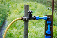 A garden tap and connected blue and yellow hose