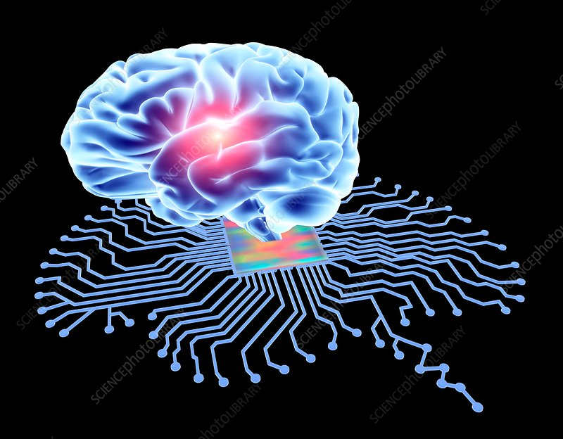 Brain shaped circuit board and brain