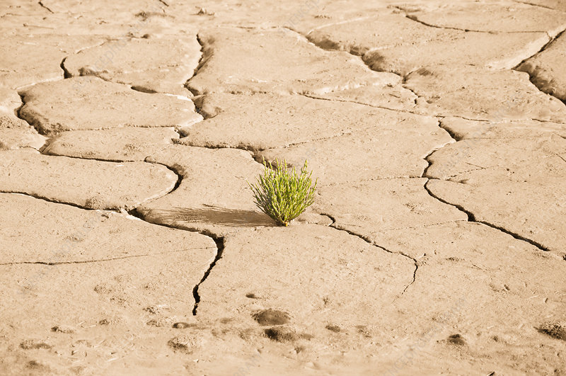 Small green plant growing in cracked earth