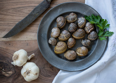 Overhead view of snail shells and garlic on table