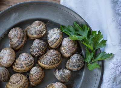 Overhead view of snail shells and herb on a plate