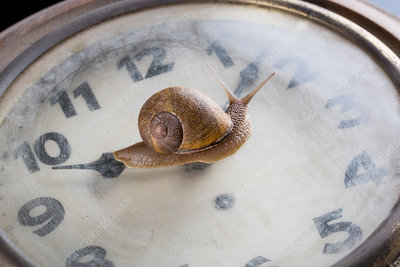 Snail moving over surface of old clock
