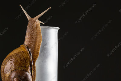 Snail moving up side of a bottle