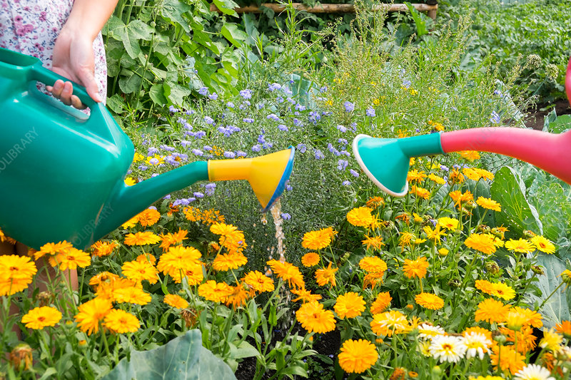 Female using watering can to water plants