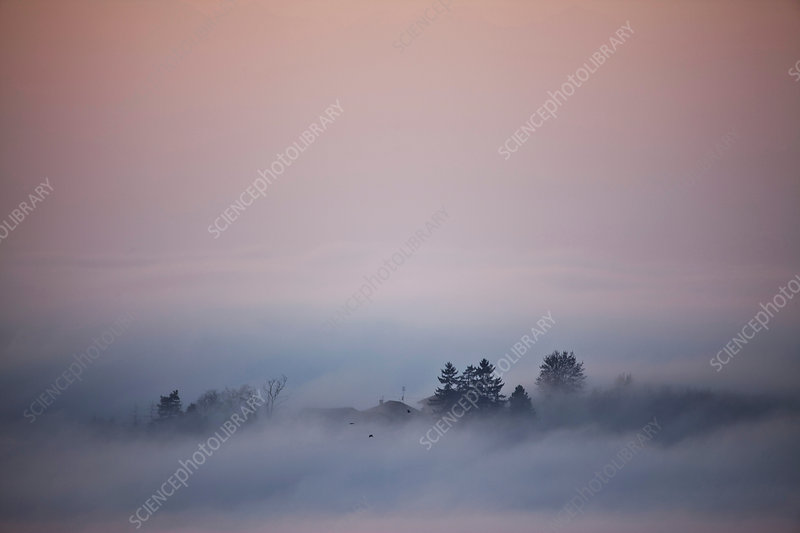 Silhouetted trees emerging from low cloud, Italy