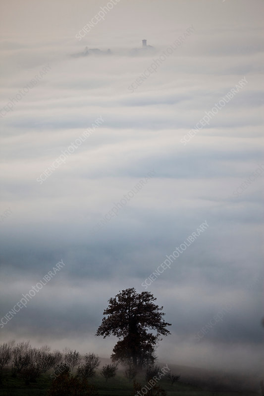 Trees and rooftops emerging from low cloud, Italy