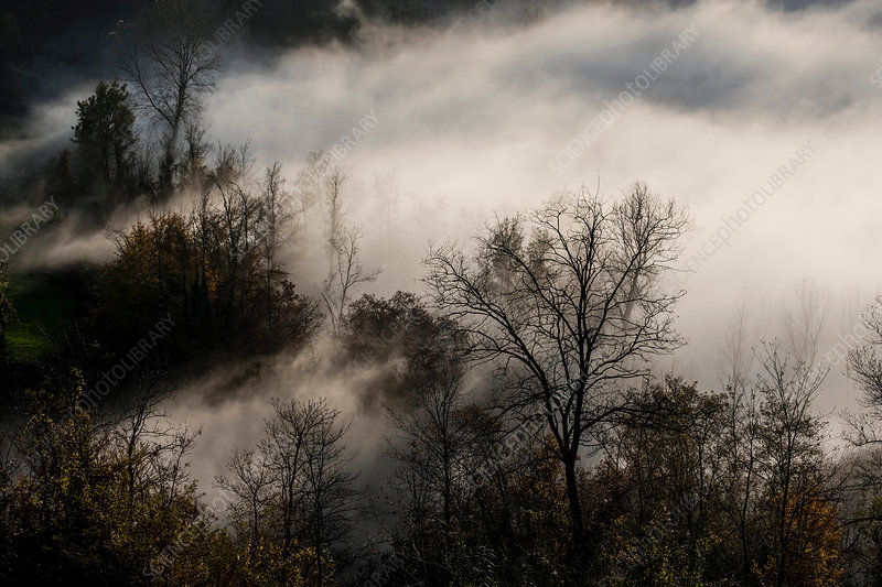 Mist clearing from silhouetted bare trees, Italy