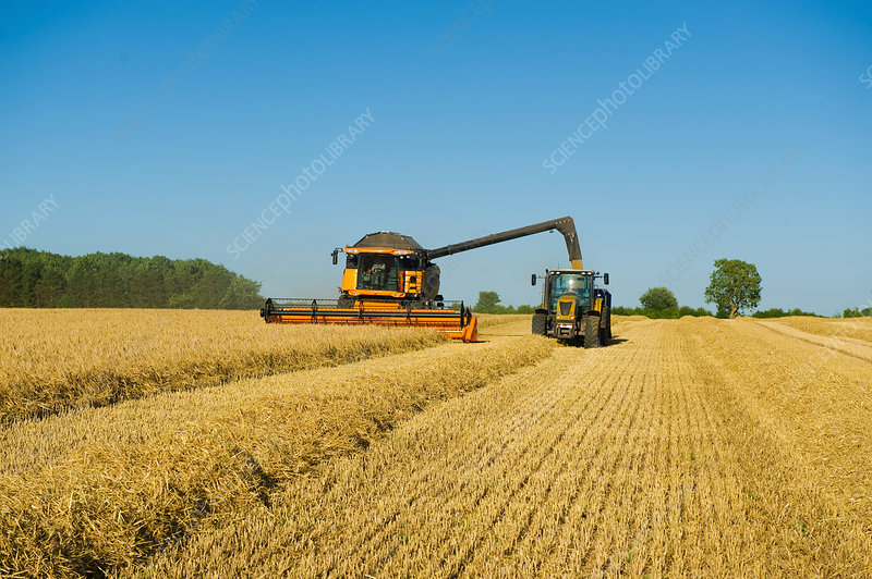 Tractor and combine harvester in wheat field