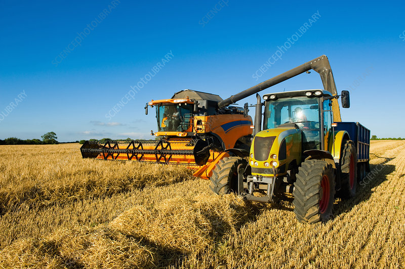 Farmers driving tractor in wheat field