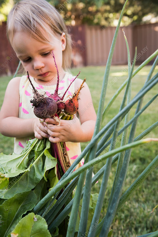 Young girl in garden, holding fresh vegetables