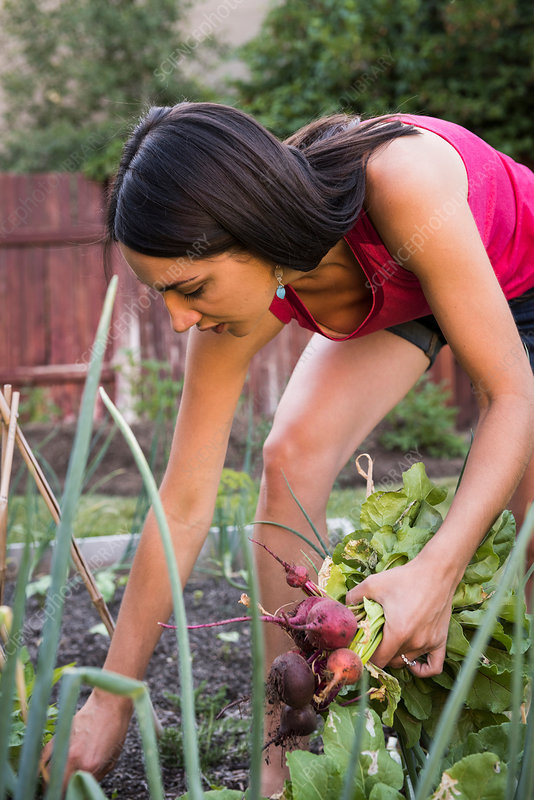 Young woman in garden, pulling fresh vegetables