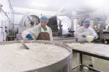 Workers making ricotta cheese in cheese factory