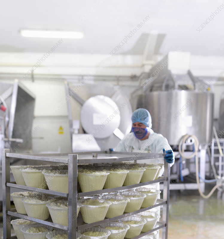 Worker with ricotta cheese in cheese factory