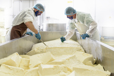 Workers cutting mozzarella cheese in factory