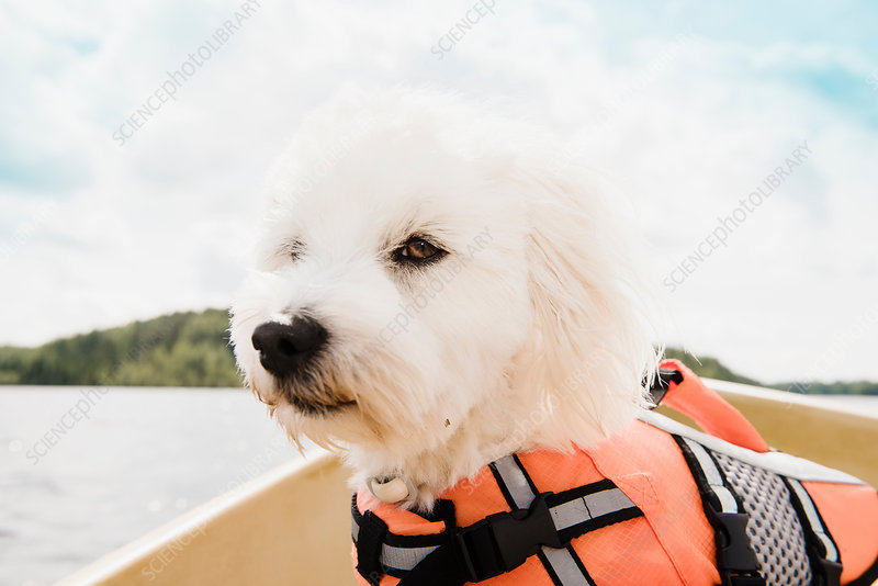 Portrait of dog on boat, Finland