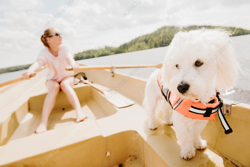 Dog with woman rowing in boat, Finland