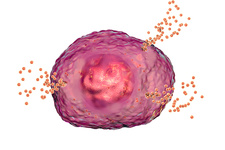 Mast cell releasing histamine, illustration
