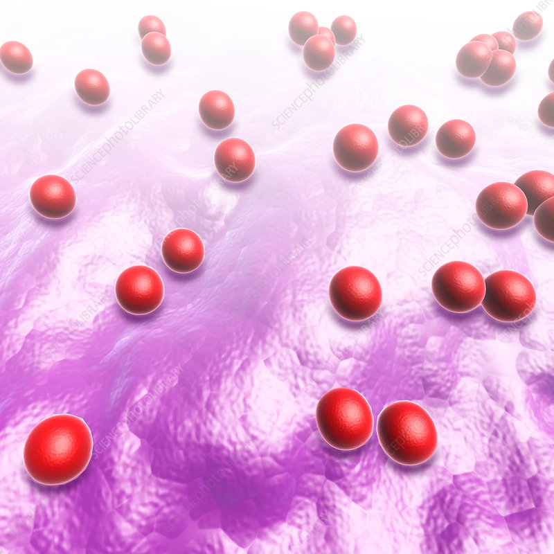 Cocci bacteria, illustration