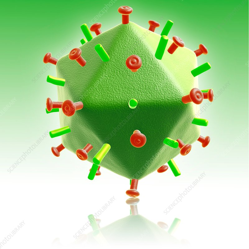 HIV particle, illustration