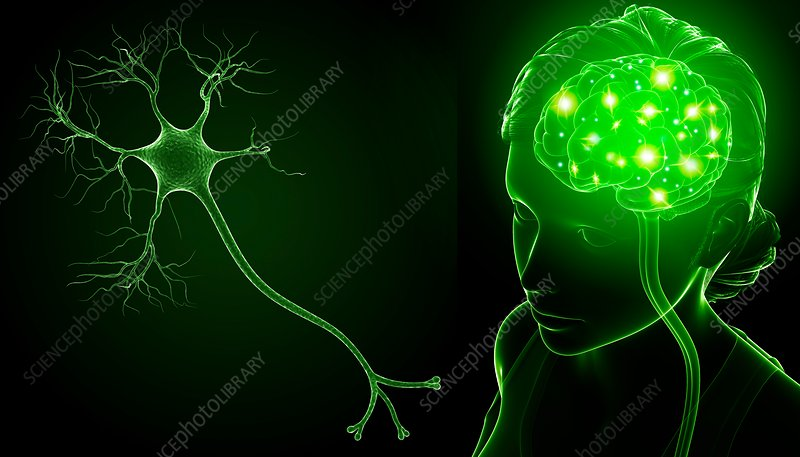 Brain and nerve cell, illustration
