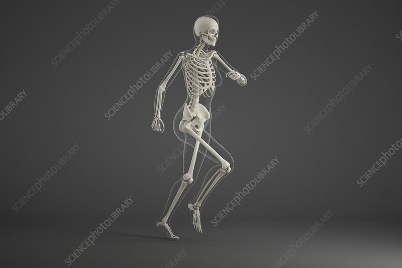 Human skeleton running