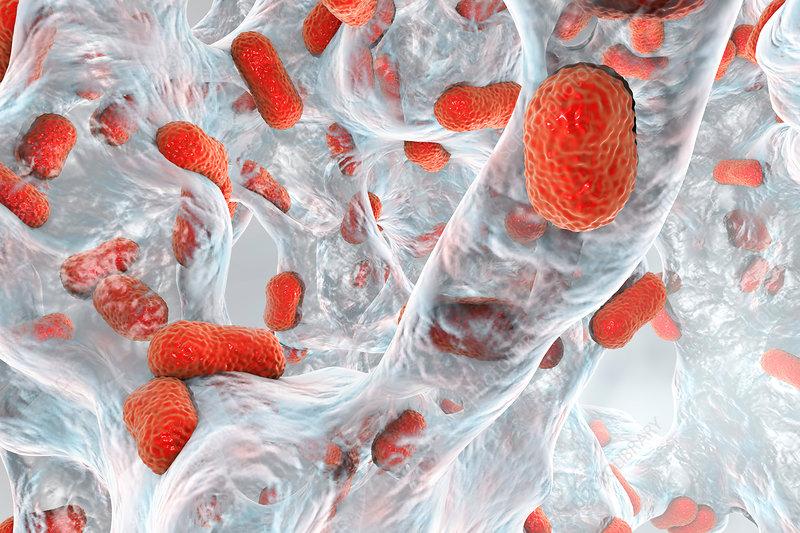 Acinetobacter baumannii bacteria, illustration